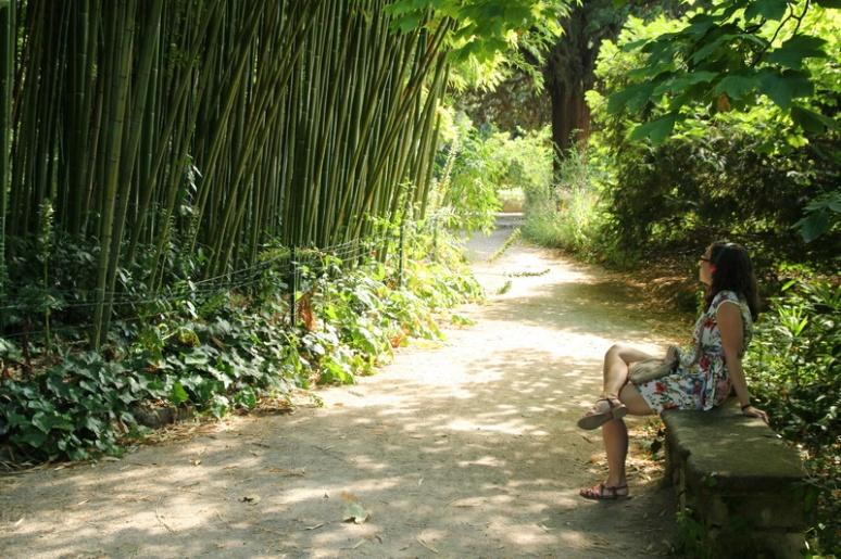 Montpellier, Jardin des Plantes.