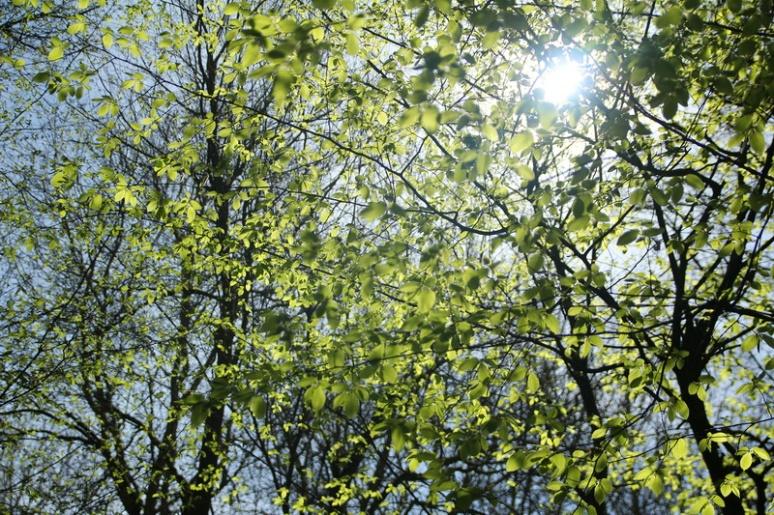 Feuillage de printemps