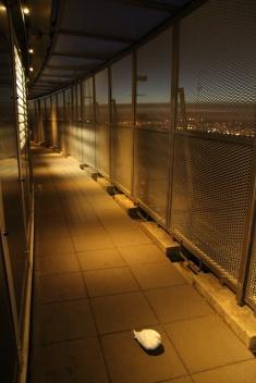 Paris. Oiseau prisonnier au 58ème étage de la Tour Montparnasse.
