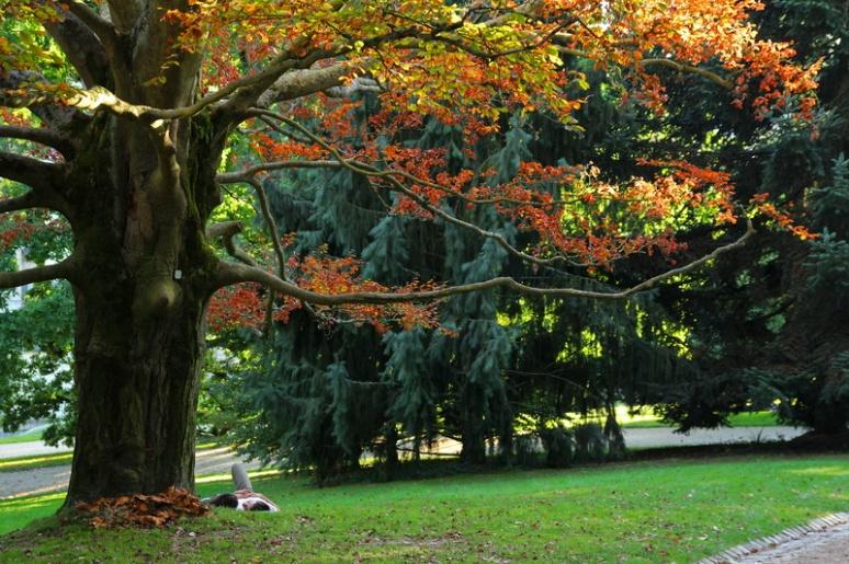 Rennes, Parc du Thabor (Sept. 2013)