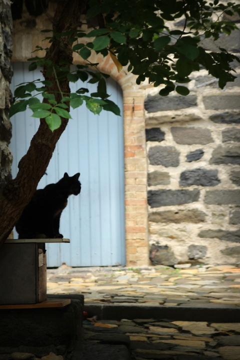 L'ombre du chat