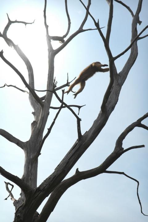 Le saut du singe