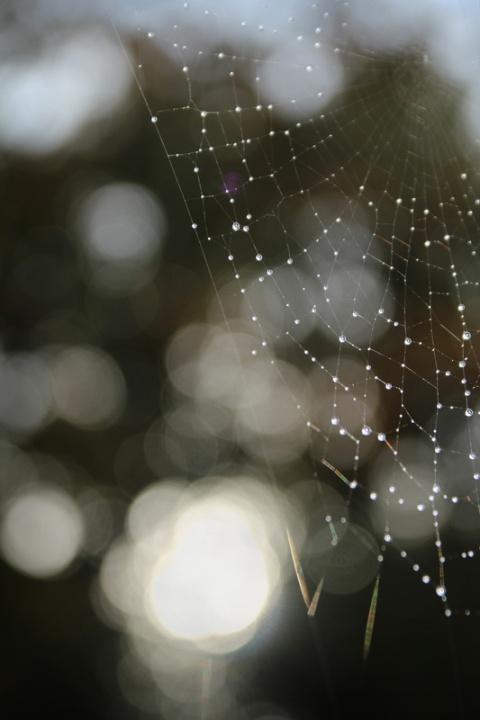 Toile d'araignée après la pluie.