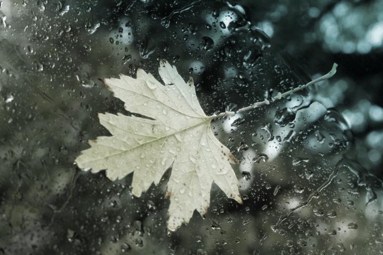 L'automne sur le pare-brise