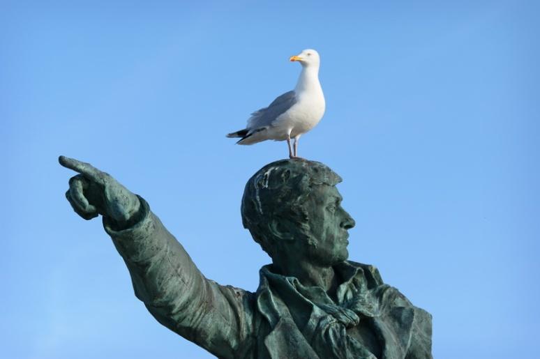 Goéland sur la statue de Surcouf (Saint-Malo)