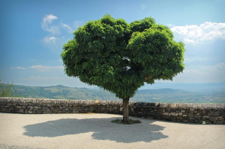 L'arbre-cœur (Saint-Laurent-sous-Coiron, Ardèche)