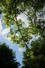 Sous mon arbre