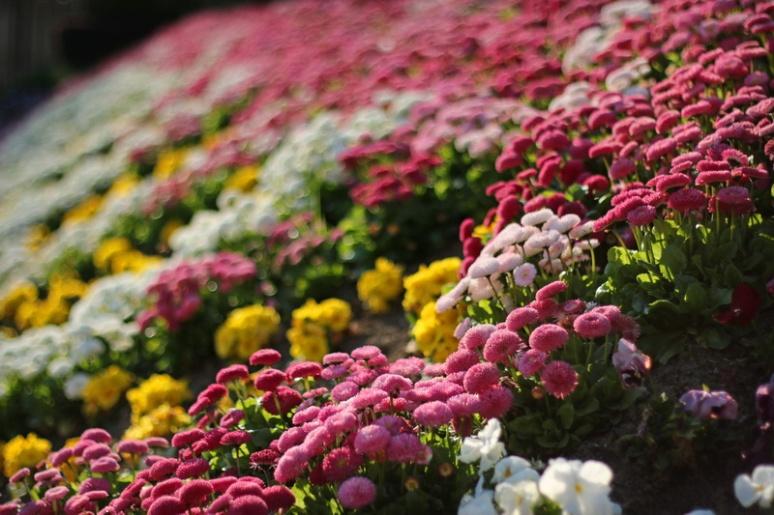 Fleurs des villes (Parc du Palais Saint-Georges, Rennes)