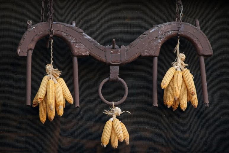 Maïs suspendu à Peratallada (Catalogne, Espagne)