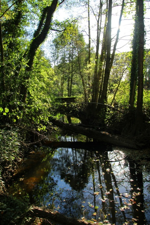 Ruisseau du Combs à Mernel (Bretagne).