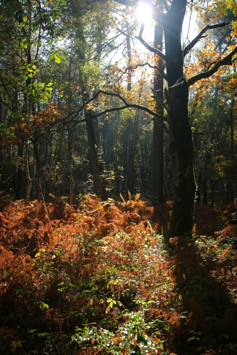 Le Bois de Courrouët (La Chapelle-Bouëxic, Bretagne)