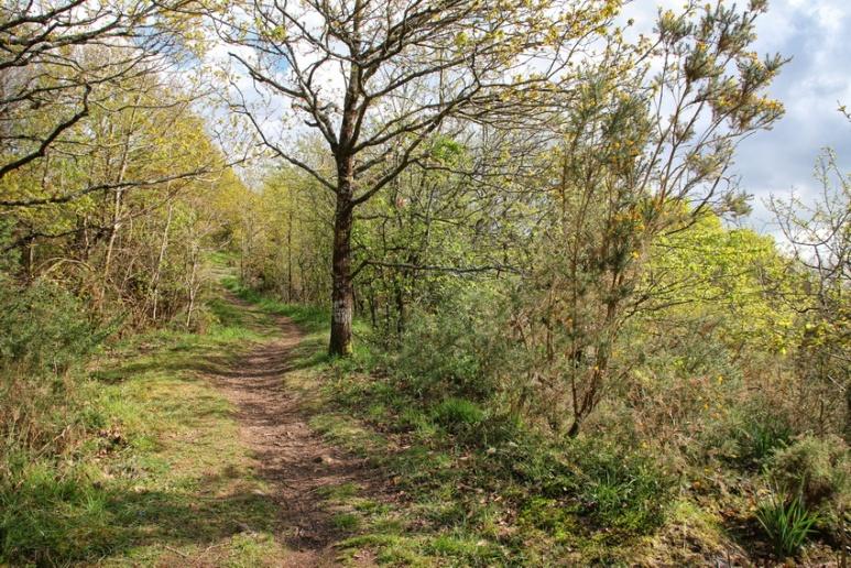 Muzillac (Morbihan), chemin de randonnée.