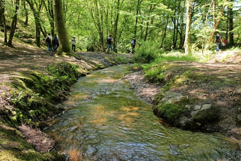 Marche en forêt de Brocéliande