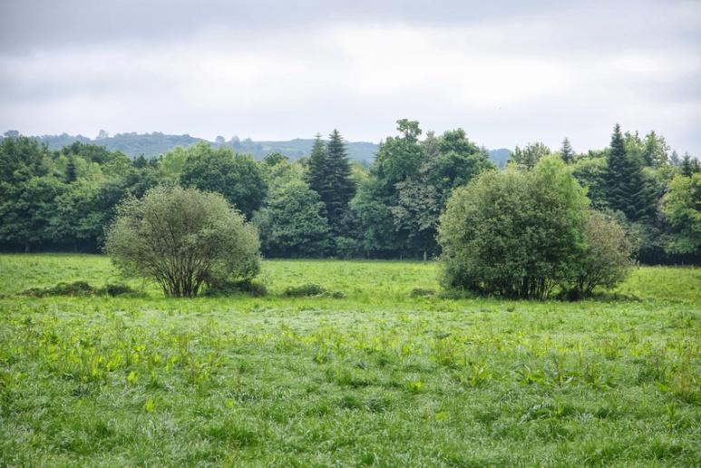 Près du château de Trécesson (Brocéliande)